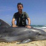 دولفين تاه مسكين ، على شاطئ بحر #غزة http://t.co/KQkm53UTMs