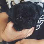 Im beyond excited to pick Nala up tomorrow! Shes the cutest little munchkin http://t.co/xBHgGZ0FQl
