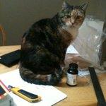 @nenshi MISSING CAT (STELLA). Lost today on Sarcee Road SW near Mount Royal University. Please help. http://t.co/uxXlIUJu1e