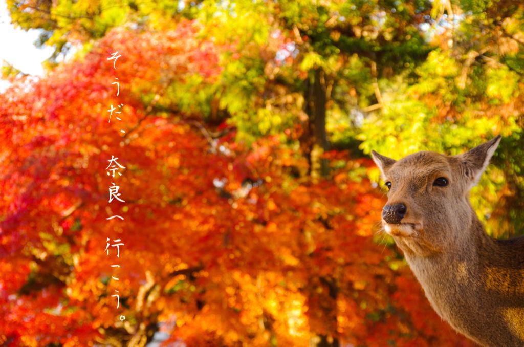 #そうだ奈良へ行こう http://t.co/DsCskFaQs2