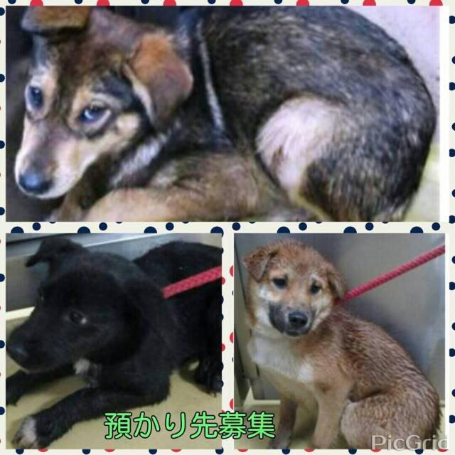 拡散希望✿ #犬 12月7日に恵比寿ガーデンプレイス、マルシェ内にて犬猫里親会をします✩ 預り先が決まらないといけない子もきますので是非よろしくおねがいします! 子犬沢山ですヽ(;▽;) 都内や神奈川 沢山の方にしってもらいたいです。 http://t.co/5KxrbHka6J