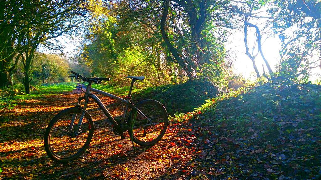 RT @EasterNeil: Finally some sunshine on my winters morning riding with my rather muddy Rockhopper #justgetoutandride @mbrmagazine http://t.co/Dx79JiDaa8