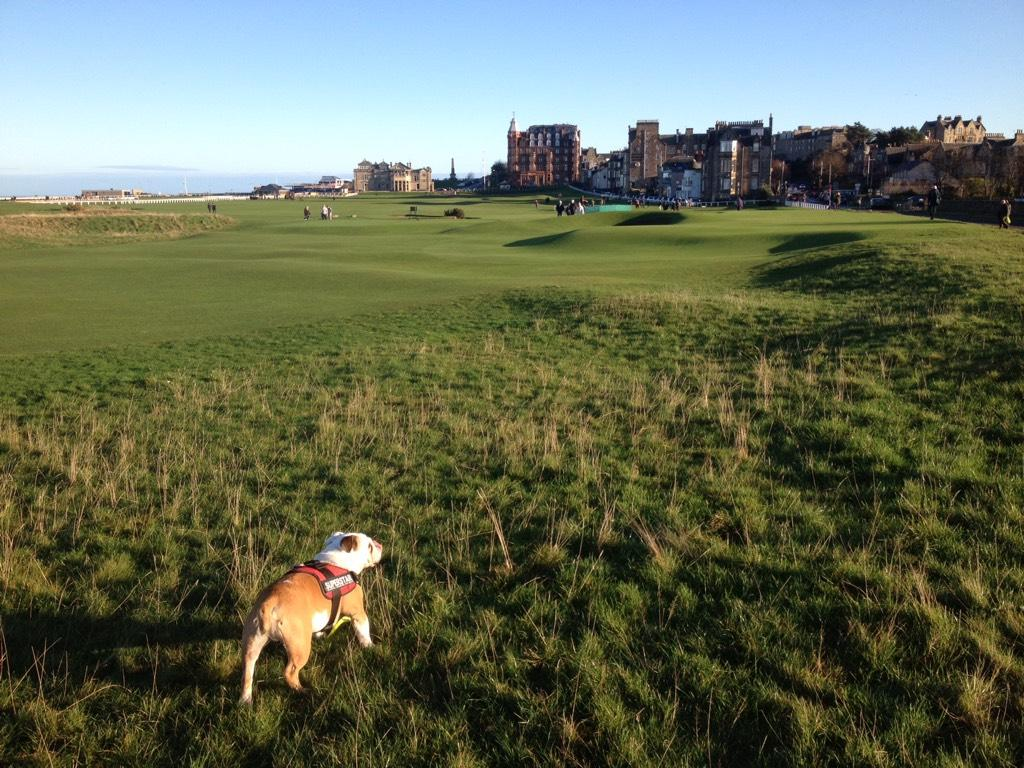 Happy #standrewsday from #standrews :) http://t.co/XlZVcjHKiX