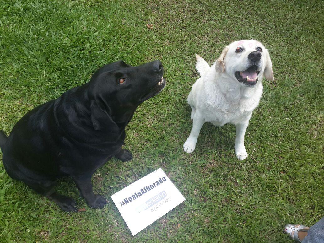 Nuestros amigos lo piden a gritos. Por nuestras mascotas decimos #NoALaAlborada. http://t.co/qPnDNOHKST