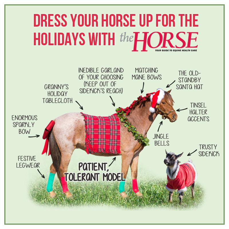 Planning your photo for holiday cards? Here are some fun ideas from your friends @thehorse!  #horses #holidays http://t.co/2Qs3P65Yxf