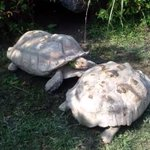 This turtle has his friend's back — literally: http://t.co/Zl4bfmHjyZ http://t.co/MBuBlBBOTd