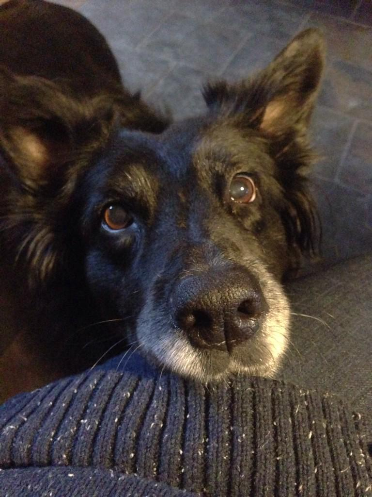 Raisins, grapes, mince pies & Christmas pudding can also be fatal for dogs - no matter how good they are begging http://t.co/fqgtsmuhPK