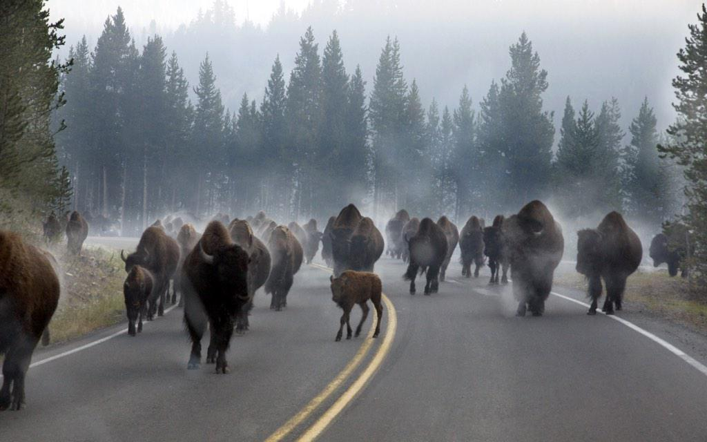 """@Interior: Our most popular pic on social media last week: This amazing shot of a #bison herd @YellowstoneNPS http://t.co/kALF60kC4W"""
