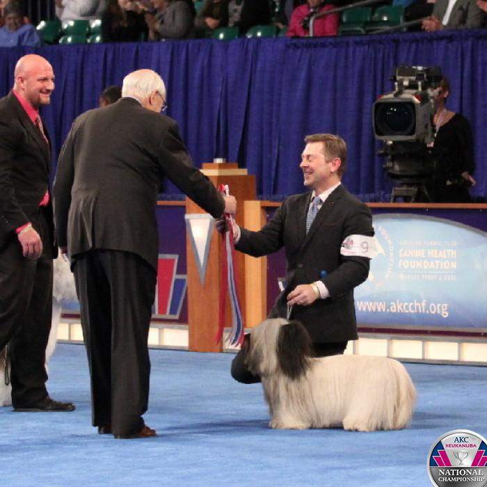 Charlie wins it! The Skye Terrier is the new champion! #CelebrateDogs http://t.co/pONi4vbJbz http://t.co/uIvZCG3b7J