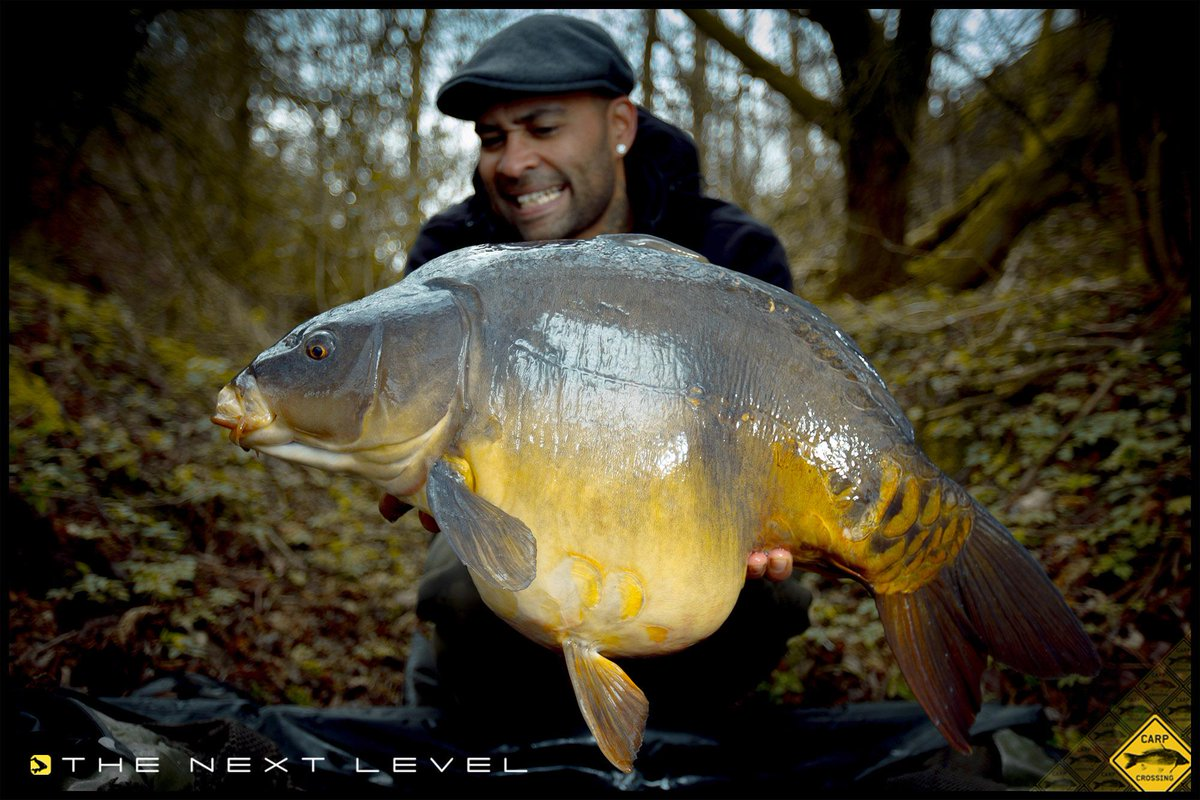 Check out this awesome mirror @EdSkillzCarp banked recently during a session on a Dutch venue #carpf