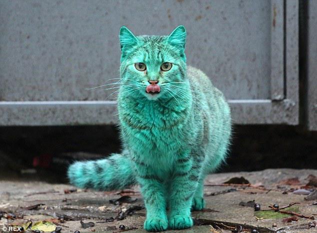 ブルガリアの黒海沿岸のリゾート地ヴァルナの街角に登場した緑の蛍光色のネコ https://t.co/DoFE3u30Pa 当初動物虐待との噂が出ましたがガレージに撒き散らしてあった塗料での上で寝てたらこうなったそうです。 http://t.co/sPyP6gU6Kl