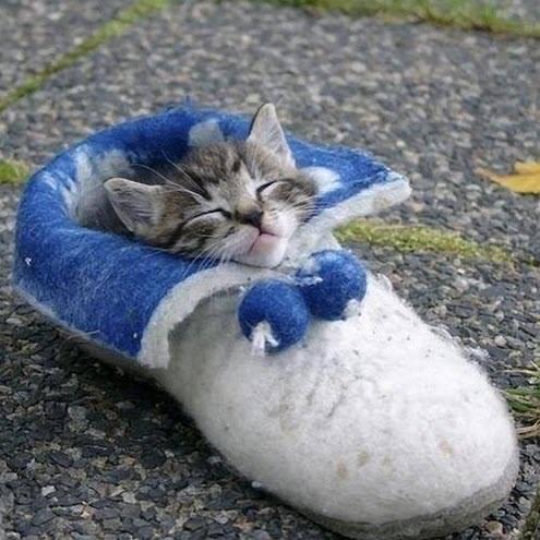 Snug As A Bug In A Rug   Well, A Kitty In A Slippy!