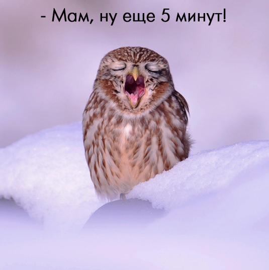 Всем доброго пятничного утра! Просыпайтесь ;) #goodmorning #friday http://t.co/2eZ81kavNm