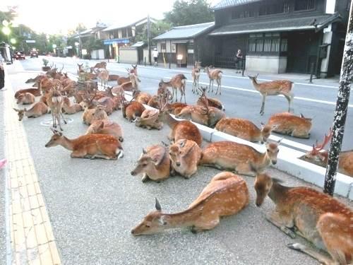 この道、鹿しかいない http://t.co/E1HbarxvCj