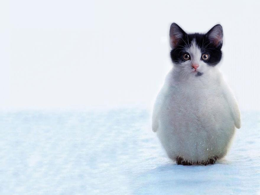 Look! It's a Penguitten! http://t.co/ElliPFXuhj