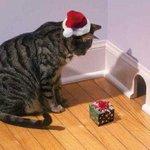 Fijne kerst met een http://t.co/1EschIrivi cadeau onder de kerstboom #kerst #Kerstaankopen #kerstkleding http://t.co/VJIEwSNmGn