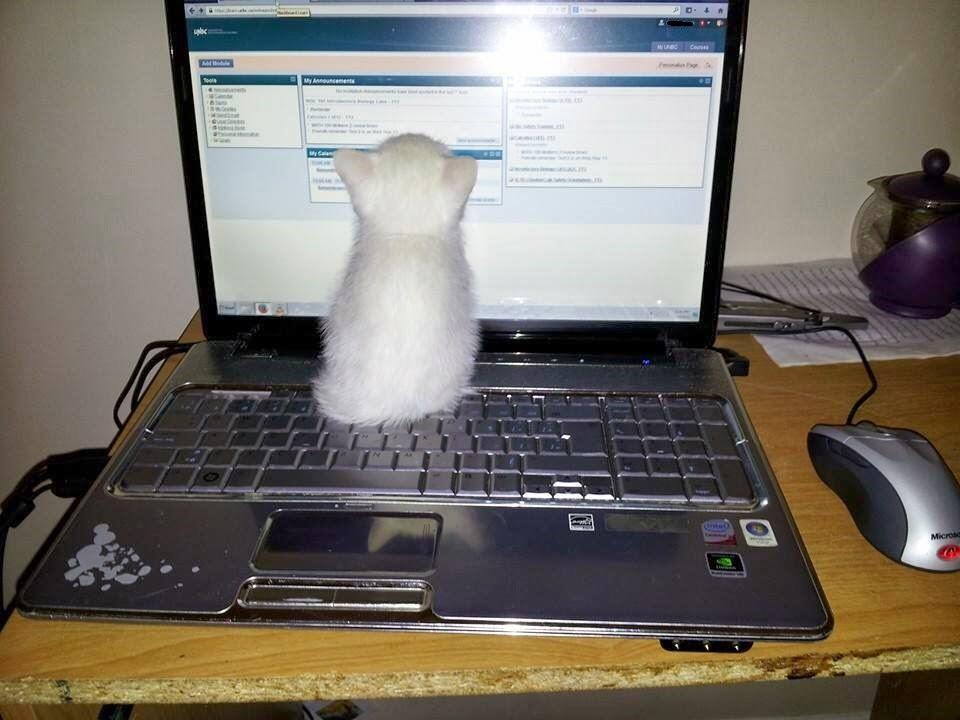 When #writerswithcats decide to get back to writing, they often find something like this. #amwriting http://t.co/78iehwh15G