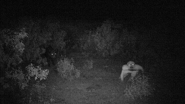 Así es la misteriosa criatura que ha aparecido en una finca de la sierra onubense http://t.co/AA0XyrbeFo http://t.co/y09WrwJnmy