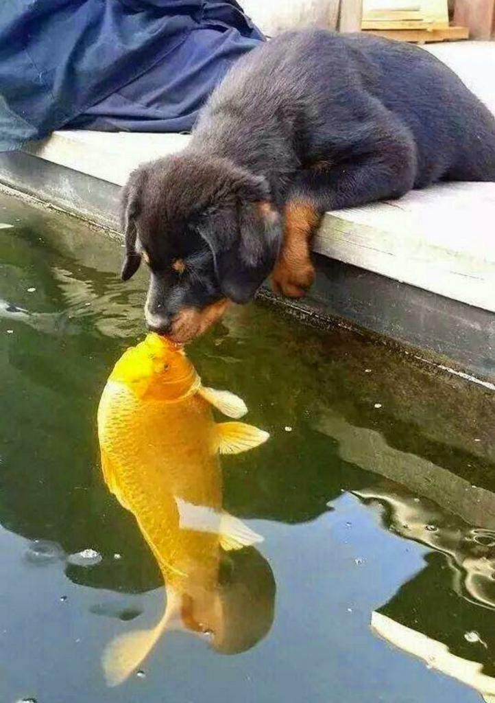 HE'S KISSING A FISH, LOOK AT THIS http://t.co/k72JbFRbIZ