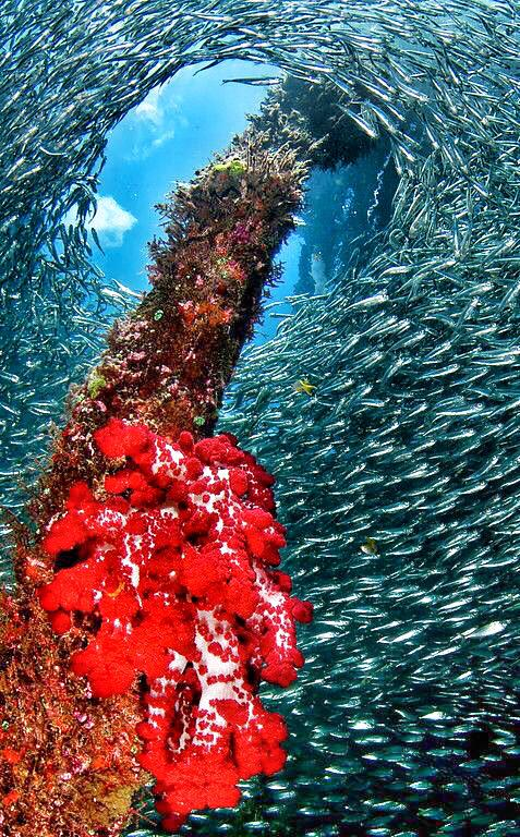Beautiful! RT @MaduroDive: Papua - Indonesia by Phil Sokol 😍😍😍 #scuba #padi #diving #underwaterphotography http://t.co/EUf838cFLp