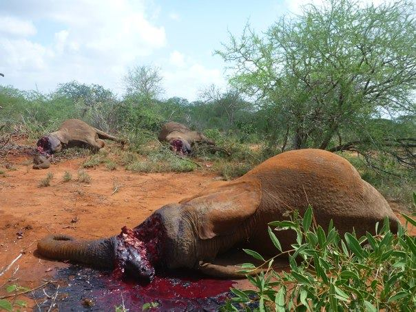 """""""We have killed about 50% of the world's vertebrate #wildlife in just the past 40 years"""" http://t.co/8bIEQtN9Fv http://t.co/8OLEluR29g"""