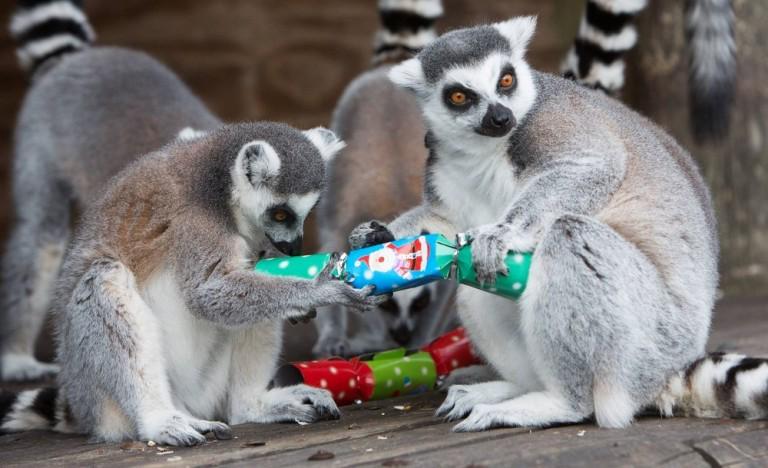 Всем хочется поскорее Новый Год :) А вы уже ощущаете праздничное настроение? #goodmorning http://t.co/dlZnerc6o6