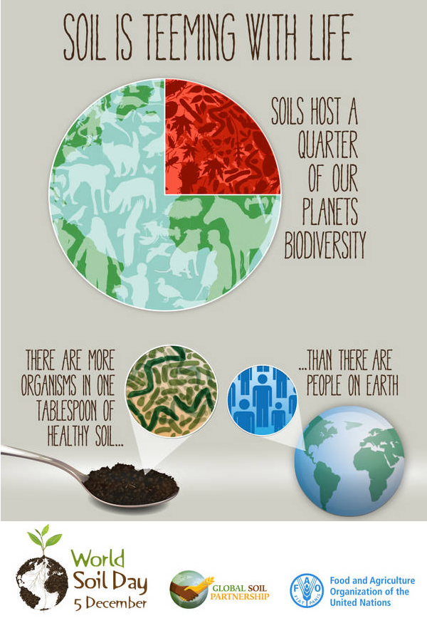 #SoilFacts: There are more organism in a tablespoon of #Soil than people on earth! #IYS2015 #Agriculture #UNFAO http://t.co/0qclLuSpi7