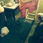 N sakhi met fluffy! Sad they dint get along:( http://t.co/lg4OMfKvSE