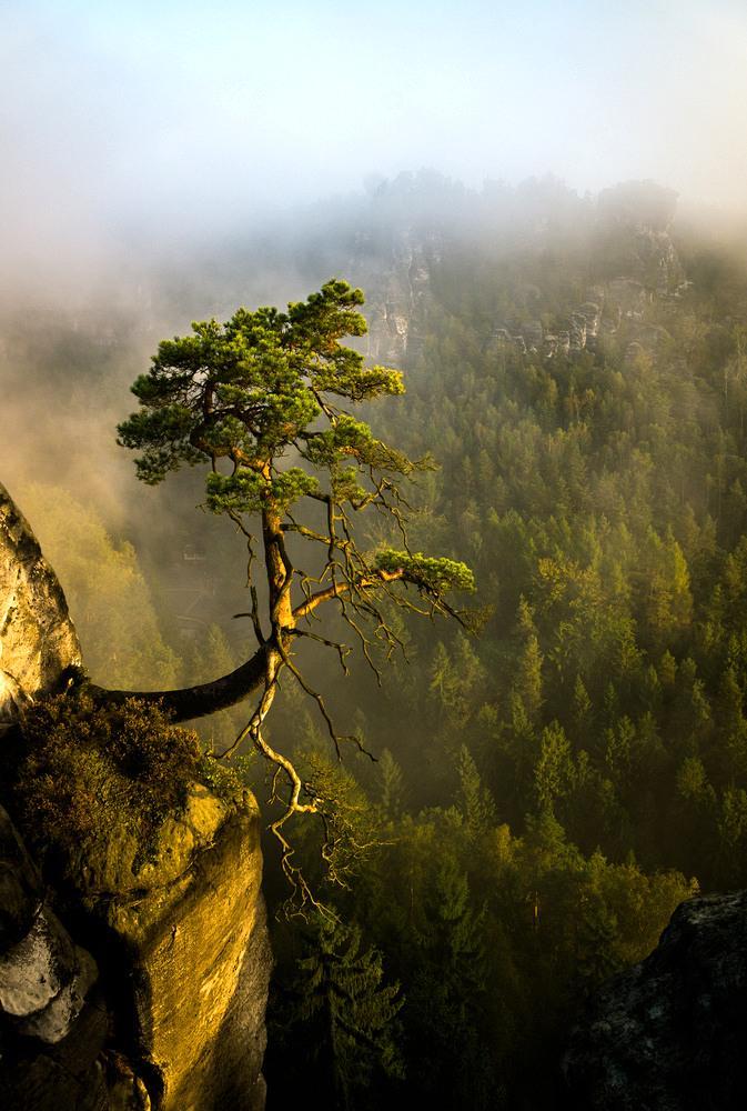 Dmitry Savin. Russia. trees. ночь. Читать. туман. tilt. town. sony. зима.
