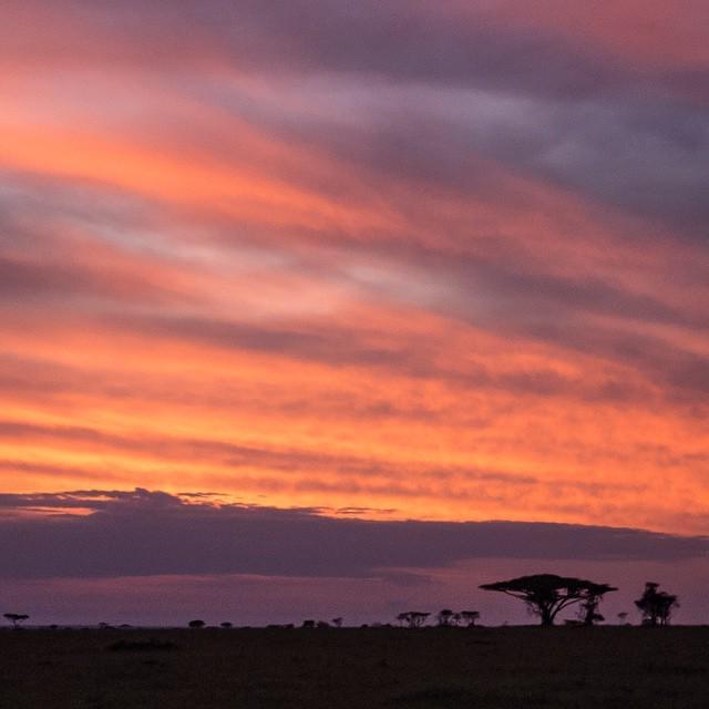 Sunrise in the Serengeti: not a quiet affair. http://t.co/DSFOWRjiGV http://t.co/iLqemLTReU