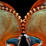 RT @wiredscience: Leafhopper gears, zebrafish brains, and the rest of this year's best biology close-ups. http://t.co/WutxPV5Cmt http://t.c…