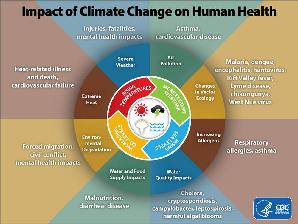 Luber: This graphic illustrates the wide range of multiple health impacts of climate change. #CDCGrandRounds http://t.co/zWgshayUEi