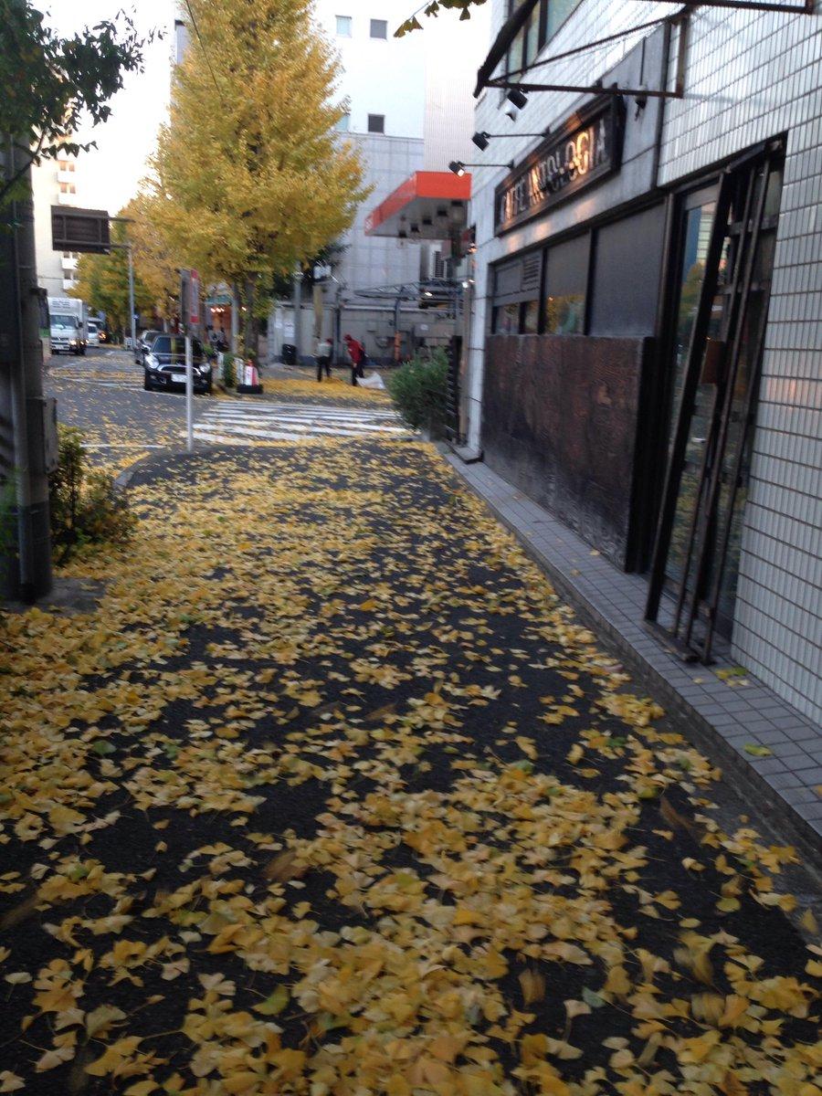 私たちのオフィスは代々木公園のすぐ近く。昨日の木枯らしで銀杏も随分散りました。「ミレポルテ」でほっこり、暖かグッズご用意してますよ! http://t.co/HOY0iwP5FZ