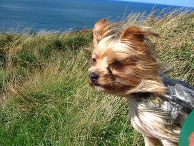 "#weatherbomb Latest from the #yorkshire terrier lookout; ""Windy with a chance of low level meatballs"". http://t.co/g1fuQe01KV"