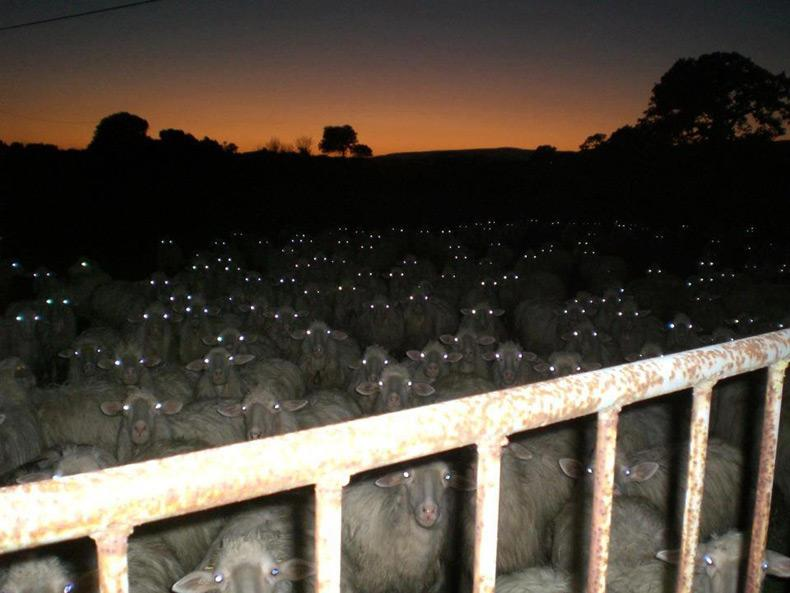 Raging wool. Silently raging wool... RT @merlreading: Whoever said the countryside was terrifying? http://t.co/rH5ksvRtnX