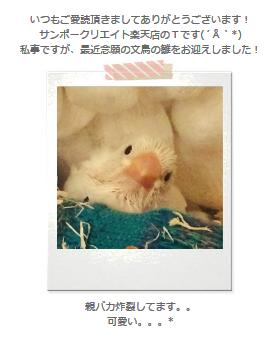 サンポークリエイト楽天店さんのメルマガの文鳥ちゃんが可愛い http://t.co/1RNMYvtkvV