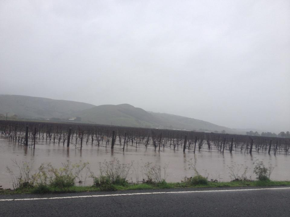 Some vineyards are starting to flood in Sonoma http://t.co/hjh1Hjfzvi