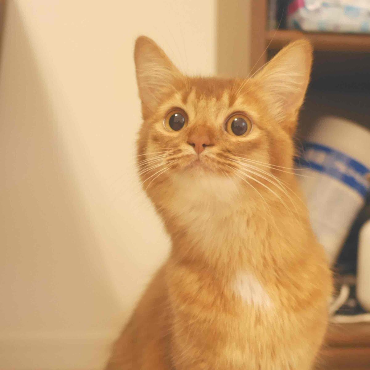 顔がまったく反省していない。。。 http://t.co/JAkYwles1k