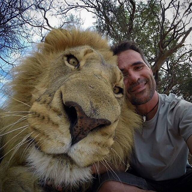 This is what a lion selfie looks like. It is one of the best selfies ever. http://t.co/MBXAE1DHxs
