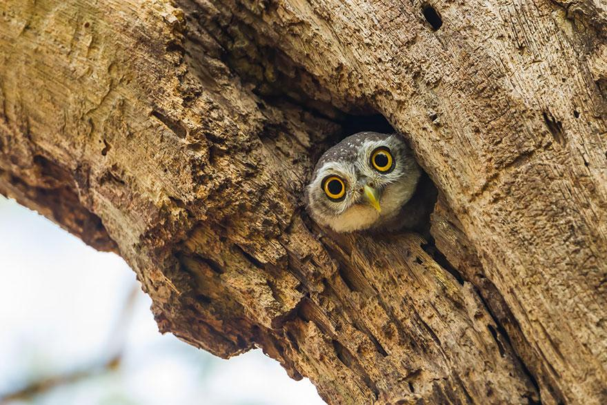 #Owl Caught On Camera | Bored Panda http://t.co/Jqy6pkWbBv http://t.co/UkJDZ6p3C6