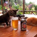 Happy weekend 2 everybody! Just enjoy ur day ;) #Histology #60s #startup #FF #photography #cats #Beer #Chillout http://t.co/uI8tXRQYGq