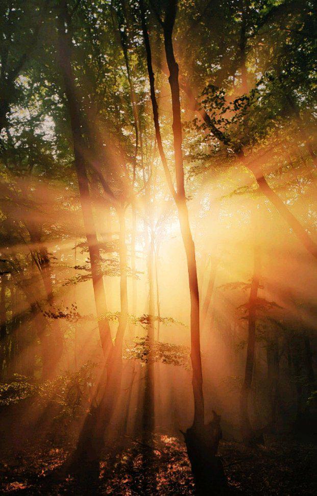 Me gusta mirar al sol, sabiendo que dejo atrás las sombras y les doy la espalda. http://t.co/jJJZAx2IQg