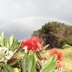 Now a #pohutukawa and #rainbow image at #muriwai #summer #Auckland #art http://t.co/DZM5AYlTHq