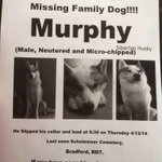 Please PLEASE help us #findmurphy by RTing! Family dog lost from #bradford ! #lostdog #murphy @Sallieaxl http://t.co/PjiaAiNrcJ