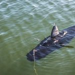The Navy's new robot looks and swims just like a fish http://t.co/AkqD0lZuIQ http://t.co/WgYt7DjIST