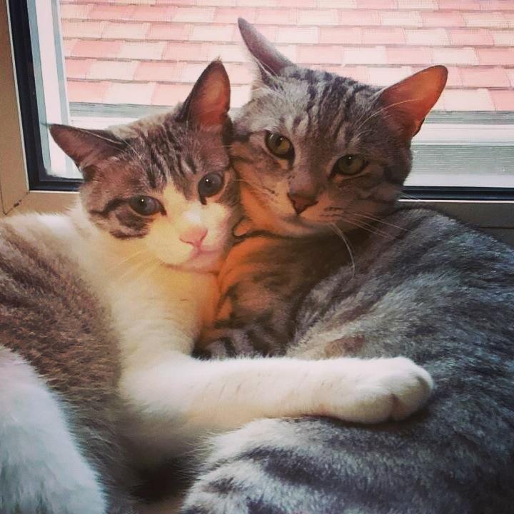 母「なんかAKB48でよく見るレイアウトで実家の#猫 たちのグラビア写真撮れましたので、ここにご報告いたします。」っていう連絡と添付に写真が来たんだが、どこでそんな色っぽい表情覚えたんだ猫(両方♂)よ。 http://t.co/ZSkyfGAHM9