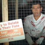 RT @PetaIndia: Tennis ace @rohanbopanna locked himself in a cage to protest cockfights. Learn why: http://t.co/TV2ccbC5ev.