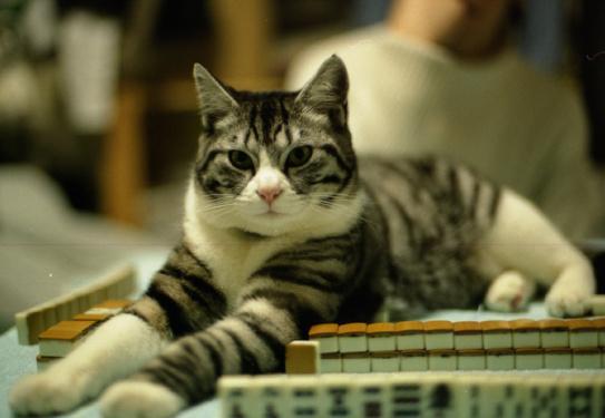 学生の頃に撮った写真で妙に思い入れ深いのが、寮でコタツを囲んで麻雀してたときに友人の猫が真ん中に座り込んじゃったときの。 http://t.co/MdIRQeetqp