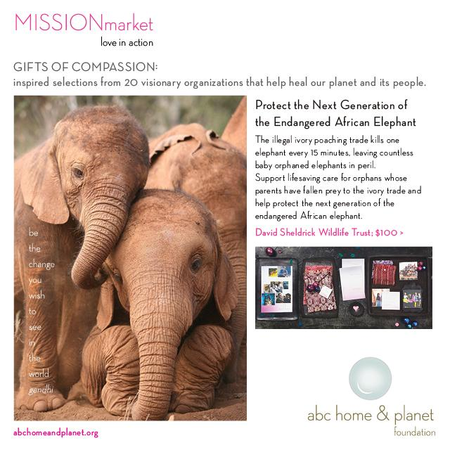 Give a gift that changes lives... help us support the @DSWT http://t.co/Za69r3Pivm #abcHoliday http://t.co/3K7ISgAE28