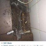 عاجل 🔴  #أمانة_جدة تغلق مطعم كنتاكي للوجبات السريعة بحي السامر لعدم الالتزام بالاشتراطات الصحية.  #السعودية #Saudi  - http://t.co/cS1FVUp9Fc